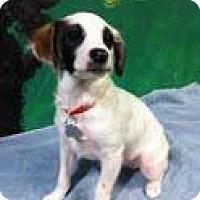 Adopt A Pet :: Dot - Goleta, CA