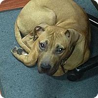 Adopt A Pet :: Zeus - Garwood, NJ