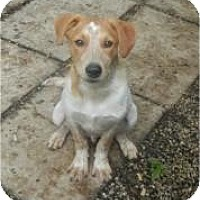 Adopt A Pet :: Beau ADOPTED!! - Antioch, IL