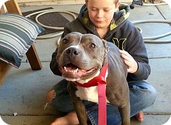 Pit Bull Terrier Mix Dog for adoption in Rosamond, California - Froggy
