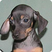 Adopt A Pet :: Fig - Ball Ground, GA