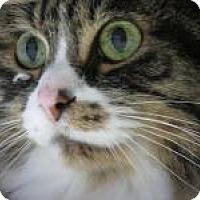 Adopt A Pet :: Precious - Quilcene, WA