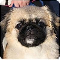 Adopt A Pet :: Angel - Huntley, IL