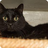 Adopt A Pet :: Missy Boy - Lombard, IL