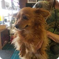 Adopt A Pet :: Roxie - Ogden, UT