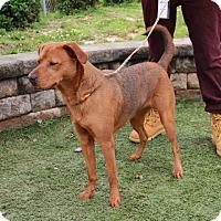 Adopt A Pet :: Myra - Greensboro, NC