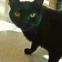 Adopt A Pet :: Girlie - Hudson, NY