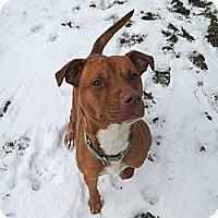 Adopt A Pet :: Pumpkin - Painesville, OH