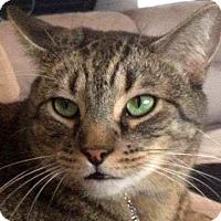 Adopt A Pet :: Buddha - Winchester, CA