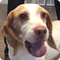Adopt A Pet :: Murphy - Canoga Park, CA
