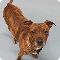 Adopt A Pet :: Hopps  ADOPTED - Tulsa, OK