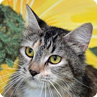 Adopt A Pet :: Missy - Englewood, FL