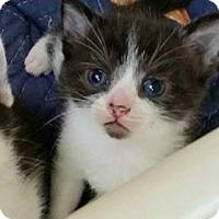 Adopt A Pet :: Redding - Austintown, OH