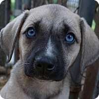 Adopt A Pet :: Aspen - Tuscaloosa, AL