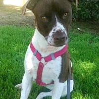 Adopt A Pet :: Sophie - Los Angeles, CA
