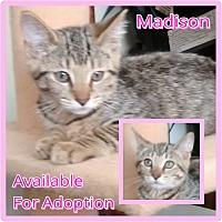 Adopt A Pet :: Madison - Lexington, KY