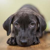 Adopt A Pet :: Lizzie - West Allis, WI