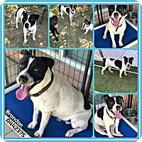 Adopt A Pet :: BRANDON - San Antonio, TX