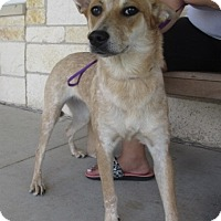 Adopt A Pet :: Francie - North Richland Hills, TX