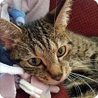 Adopt A Pet :: Juniper - Greensburg, PA