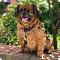Adopt A Pet :: Annabelle - Rockville, MD