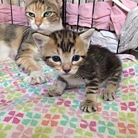 Adopt A Pet :: Lyle - Lake Jackson, TX