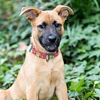 Adopt A Pet :: Ivy - Fayetteville, AR