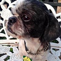 Adopt A Pet :: Josh Ventura - Euless, TX