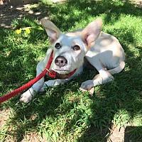Adopt A Pet :: Nas - Calverton, NY