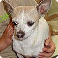 Adopt A Pet :: PEANUT - Leesport, PA