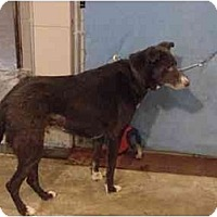 Adopt A Pet :: Max/Adopted! - Zanesville, OH