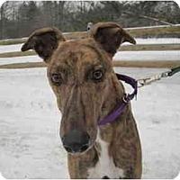 Adopt A Pet :: Nacho (Ub Nacho Libre) - Chagrin Falls, OH