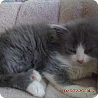 Adopt A Pet :: Zeema - Acme, PA