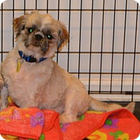 Adopt A Pet :: Jefferson - Prole, IA