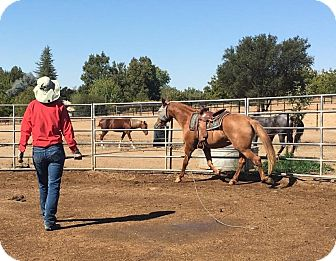 Mustang for adoption in Sac, California - Sierra