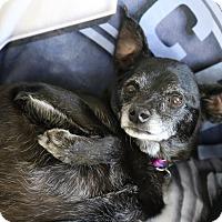Adopt A Pet :: Sammie - San Diego, CA