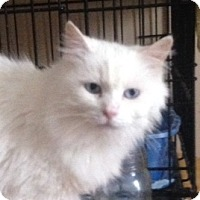 Adopt A Pet :: Fiona - Germantown, MD