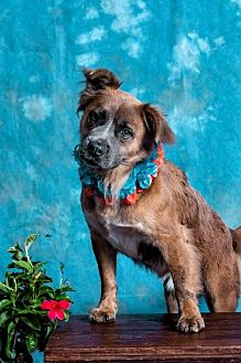 Retriever (Unknown Type) Mix Dog for adoption in Sarasota, Florida - Ted