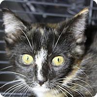 Adopt A Pet :: Sherluck - Sarasota, FL
