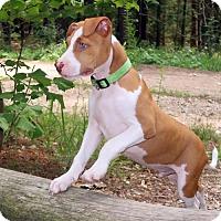 Adopt A Pet :: Ben - New City, NY