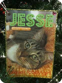 Domestic Shorthair Cat for adoption in Oviedo, Florida - Jesse