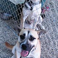 Adopt A Pet :: Gigi & Felix - Castaic, CA