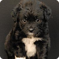 Adopt A Pet :: Groom - Newland, NC