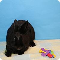 Adopt A Pet :: Storm - Birmingham, AL