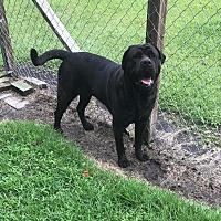Adopt A Pet :: Rolo - Newport, NC