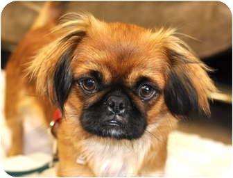 Minnie | Adopted Dog |...