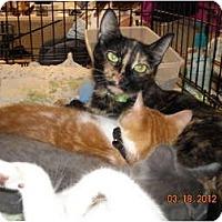 Adopt A Pet :: Glynda - Riverside, RI