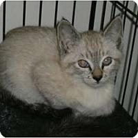 Adopt A Pet :: Lexy - lake elsinore, CA