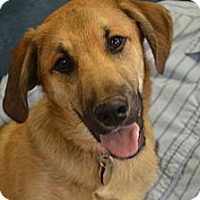 Adopt A Pet :: Lil Jake - Hagerstown, MD