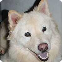 Adopt A Pet :: Blanca - Allentown, PA